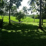 View of the paddy fields from the hammock