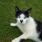 Gerry, the loveable and friendly kitty with a heart nose!