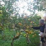 Paolo's Citrus