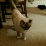 Jerry - The hotel cat!