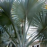 Palm outside our door