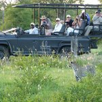 Leopard sighting in Dulini