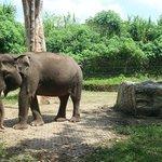 Elephant Area at Safari Journey