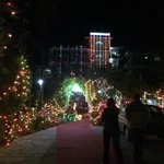 Wedding lights in the entrance driveway to the hotel