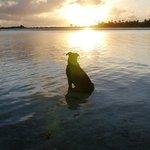 キアオラのアネックス ル・ソバージュの犬 ブル