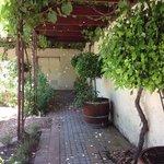 Vines near the herb garden at Blaauwklippen.