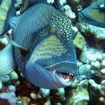 Foto de Top Dive, Bora Bora