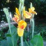 fiori del giardino del B&B Magic Garden