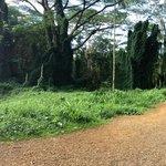 Manoa Falls - please bury me here