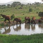 Safari Tsawo Ovest