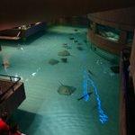 Enorme aquário de Arraias