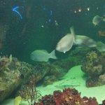 Várias espécies de peixes
