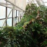 Parte da Rain Forest