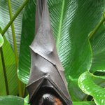 murciélago en la puerta del restaurante