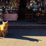 A shop cat at the temple shop