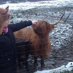 Cathy the coo
