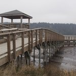 Nisqually Foot Bridge
