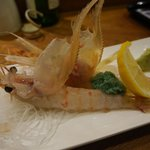 Botan  shrimps