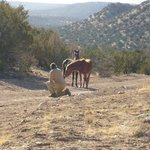 Roch and 2 wild horses entice each other