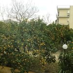 Lemon tree view from breakfast room