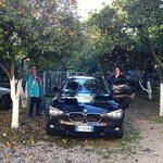 car parked under orange trees