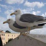 Gaivotas vistas no terraço do Monumento Vittoriano