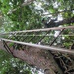 Zipline Ladder....