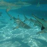 Shark and Ray Tour