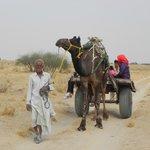 Safari on camel cart