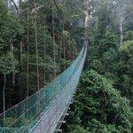 hanging bridge / canopy walk