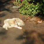 Gabriella's two beloved dogs enjoying the winter sun