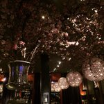 Japanese cherry blossom and chandeliers at Meerbar.