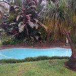 Our tropical garden & pool