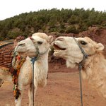 During the Ourika Valley tour you get up close and personal with camels :)