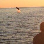 Who needs Sea World