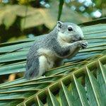 Ecureuil dans les jardins