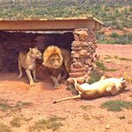 Safari at Anquila