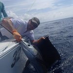 Husband's sailfish