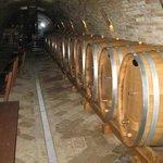 New cellar wine