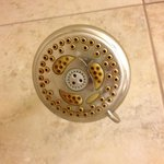 Shower head is a moldy oldie!