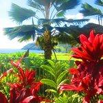 Gardens at the Marriott Kauai Lagoons