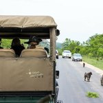 Game drive vehicle & baboons in nearby Kruger Park