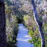 Pygmy forest walk