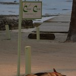 """Reef"", the German Shepherd is a great guard dog and companion to visitors!"