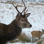 Wildlife of Glencoe .