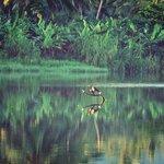 flora e fauna nel sottostante fiume