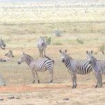 il safari allo Tsavo est