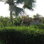 vue du jardin depuis les chambres