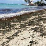 Yards and yards of seaweed