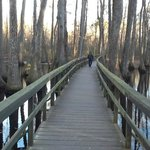 The Cypress Swamp in winter